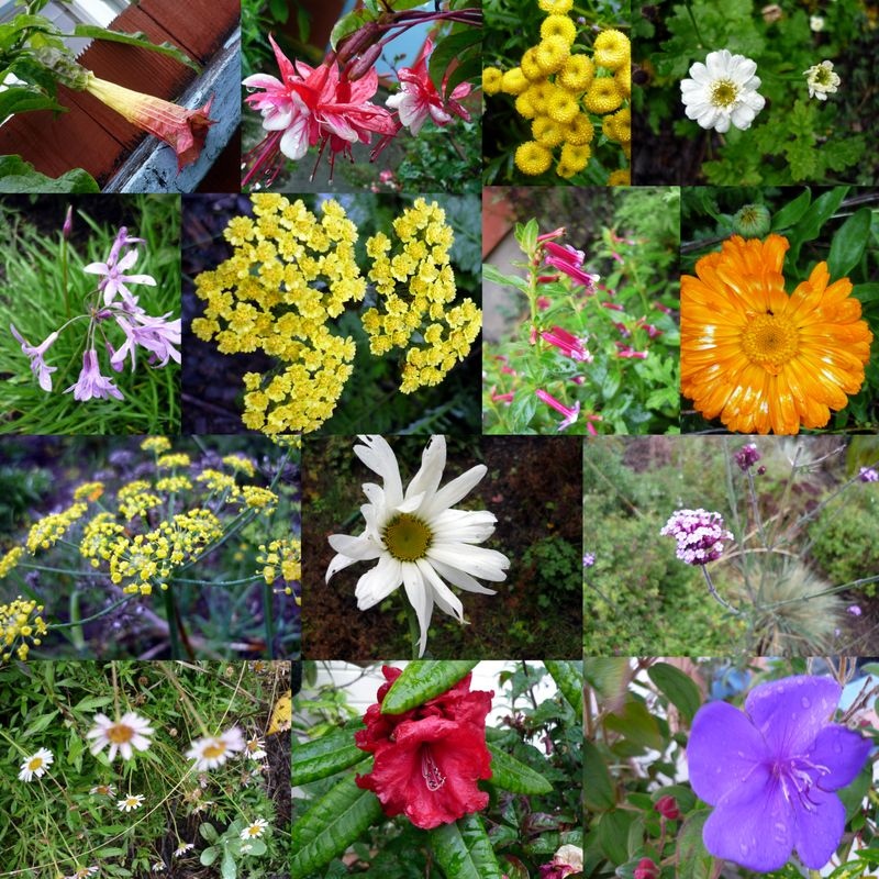 Bloom day collage