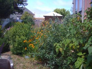 My Crazy Garden